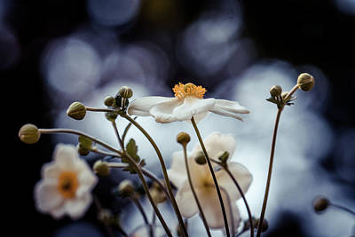 Photograph - White Flowers by Lilia D