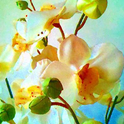Photograph - White Flowers  by Marianne Dow