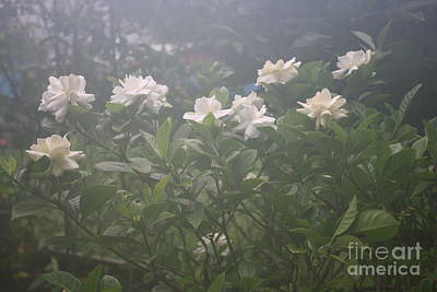 Photograph - White Flowers by Mary-Lee Sanders