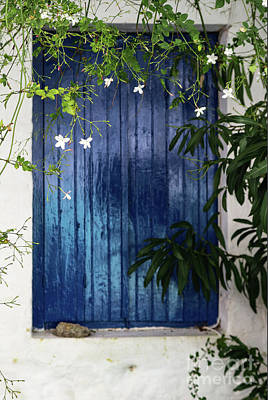 Photograph - White Flowers On Vine Hanging In Front Of Blue Shuttered Window In Greece by Susan Vineyard