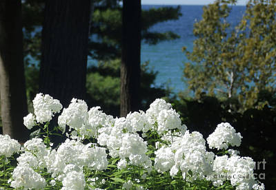 Photograph - White Flowers W16 by Monica C Stovall