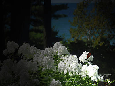 Photograph - White Flowers W17 by Monica C Stovall