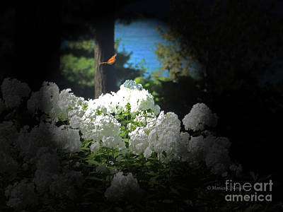 Photograph - White Flowers With Monarch Butterfly by Monica C Stovall