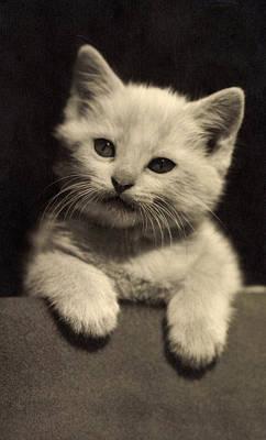 White Fluffy Kitten Art Print by German School