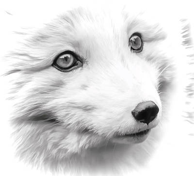 Photograph - White Fox Face by Athena Mckinzie