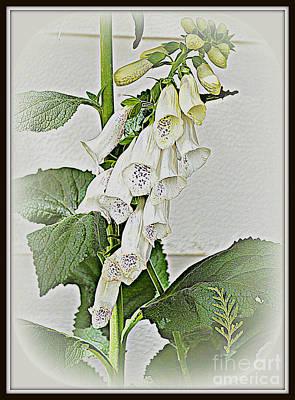 Photograph - White Foxglove by Diane montana Jansson