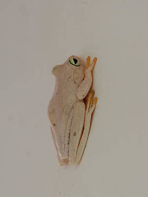 Polaroid Camera - White Frog by Carol Ailles