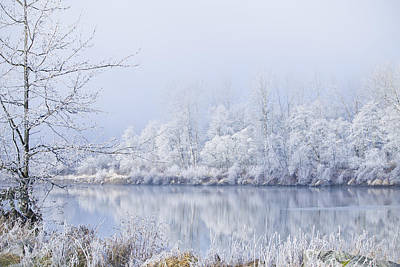 Photograph - White Frost by Windy Corduroy