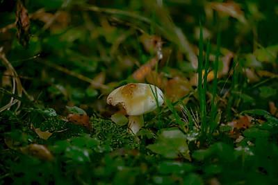 Photograph - White Fungi by Leif Sohlman