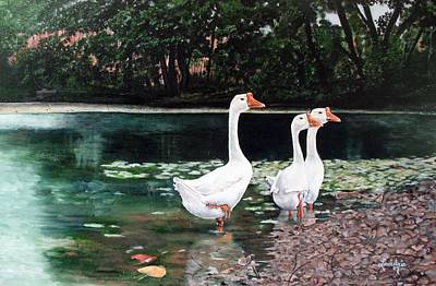White Geese In Early Fall '07 Art Print