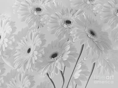 Photograph - White Gerbera Daisies by Jeannie Rhode