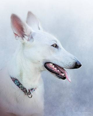 Photograph - White German Shepherd, Canine Portrait by Melissa Bittinger