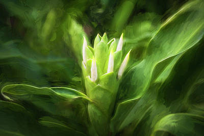 Photograph - White Ginger Flowers H Coronarium Painted 003 by Rich Franco