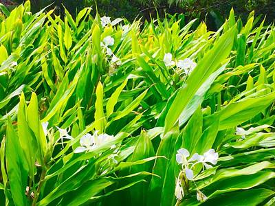 Photograph - White Ginger In The Rainforest  by Lehua Pekelo-Stearns