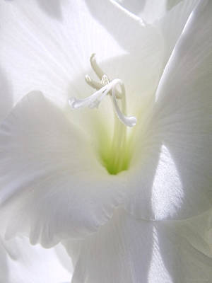 White Gladiola Flower Macro Art Print by Jennie Marie Schell