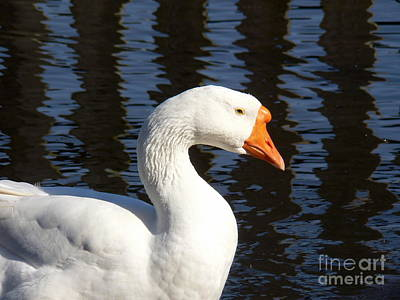 White Goose Art Print by Elizabeth Fontaine-Barr