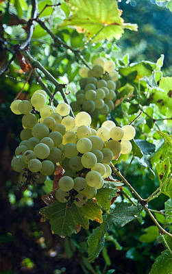 Photograph - White Grapes 1 by Jani Freimann