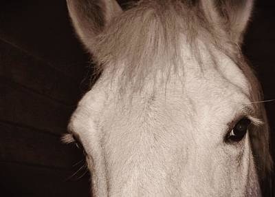 Photograph - White Grey Mare by JAMART Photography