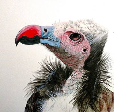 Painting - White Headed Vulture by Joan Mansson