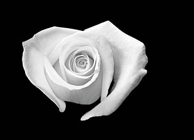 Of Roses And Love Wall Art - Photograph - White Heart-shaped Rose by Glennis Siverson