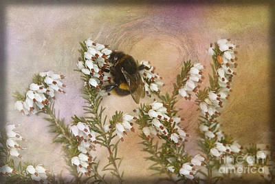 Photograph - White Heather And Bumble by Liz Alderdice