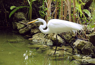 Photograph - White Heron by Cindy Lee Longhini