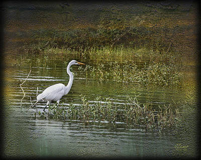 Photograph - White Heron by Jim Ziemer