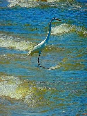 Photograph - White Heron On Lake Erie by Beth Akerman