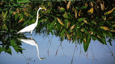 Photograph - White Heron Reflection Delray Beach Florida by Lawrence S Richardson Jr