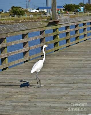 Photograph - White Heron Struting His Stuff-3 by Bob Sample