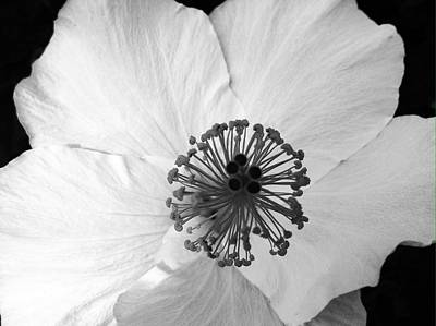 Photograph - White Hibiscus- Black And White- Edit by Alohi Fujimoto