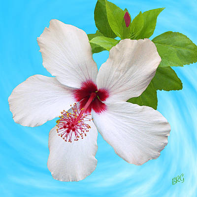 Photograph - White Hibiscus - Good Morning by Ben and Raisa Gertsberg