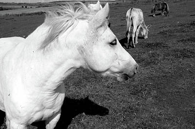 Photograph - White Horse by Aidan Moran