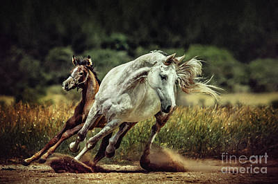 Photograph - White Horse And Foal Running Wild by Dimitar Hristov