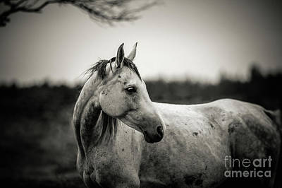 Photograph - White Horse Autumn Portrait by Dimitar Hristov