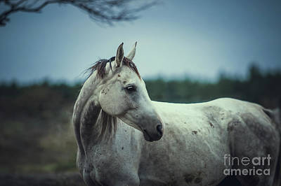 Photograph - White Horse Autumn Portrait Vintage Colors by Dimitar Hristov