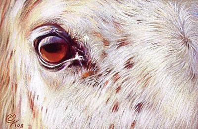 Equine Drawing Drawing - White Horse Close-up by Elena Kolotusha