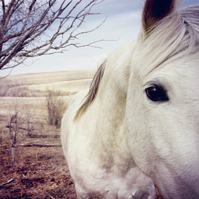 White Horse Close Up Print by Lori Andrews