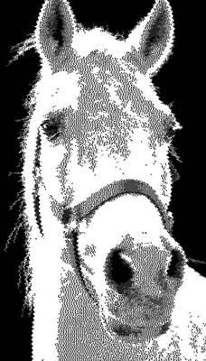 Drawing - White Horse - Cross Hatchng by Samuel Majcen