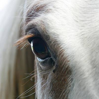 Close Up Horses Photograph - White Horse Eye by Doug88888