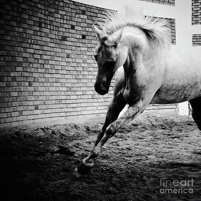 Photograph - White Horse Galloping Black And White Photography by Dimitar Hristov