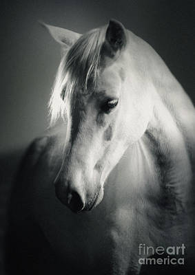 Photograph - White Horse Head Art Portrait by Dimitar Hristov