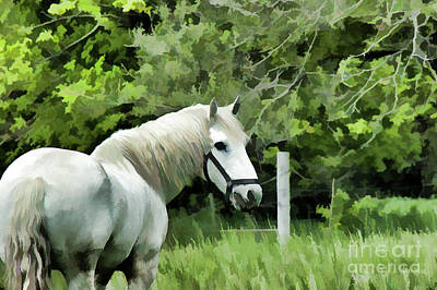 Photograph - White Horse In A Green Pasture by Wilma Birdwell