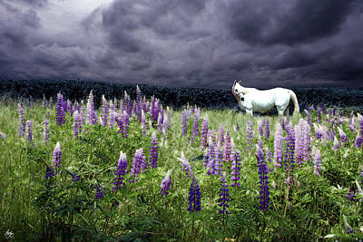 Photograph - White Horse In A Lupine Storm by Wayne King