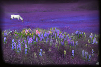 Photograph - White Horse In A Violet Dream by Wayne King