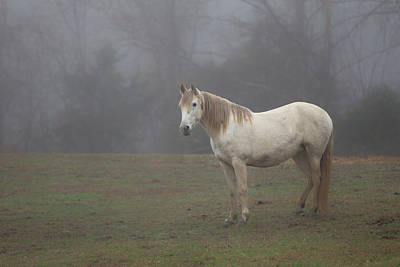 Photograph - White Horse In Fog by Jack Nevitt