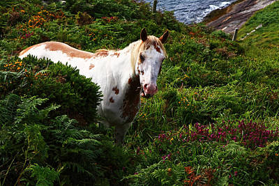 Photograph - White Horse In Landscape by Aidan Moran