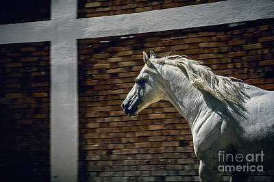 Photograph - White Horse In The Stud by Dimitar Hristov