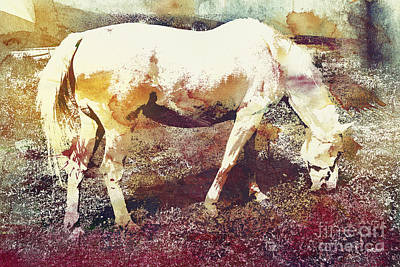 Photograph - White Horse by Jutta Maria Pusl
