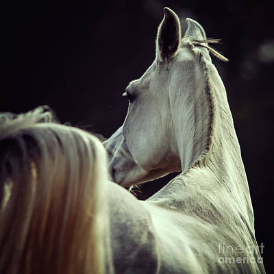 Photograph - White Horse Looking Behind by Dimitar Hristov
